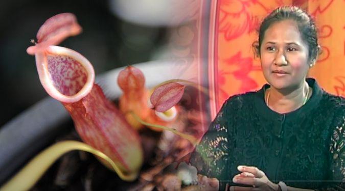 ม.วลัยลักษณ์ ค้นพบหม้อข้าวหม้อแกงลิงสายพันธ์ใหม่ของโลก