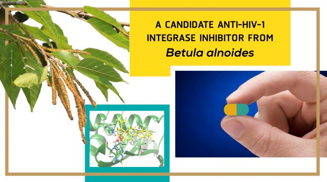 A Candidate Anti-HIV-1 Integrase Inhibitor from Betula alnoides
