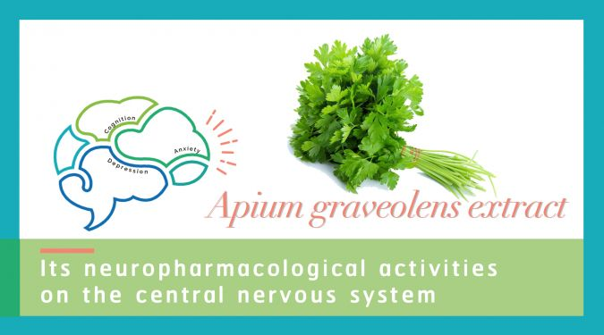 Influence of Apium graveolens L. extract on the central nervous system