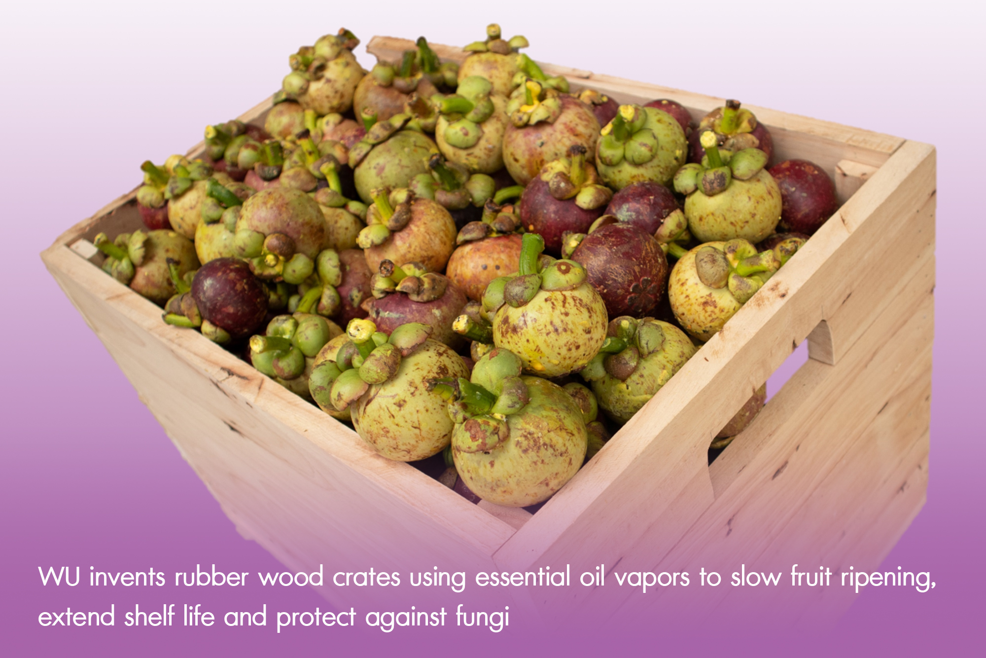 WU invents rubber wood crates using essential oil vapors to slow fruit ripening, extend shelf life and protect against fungi